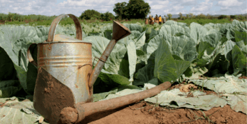 A watering can and spade in a field