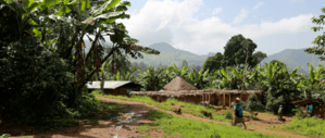 A lush, green Cameroonian landscape, with a mountainous background
