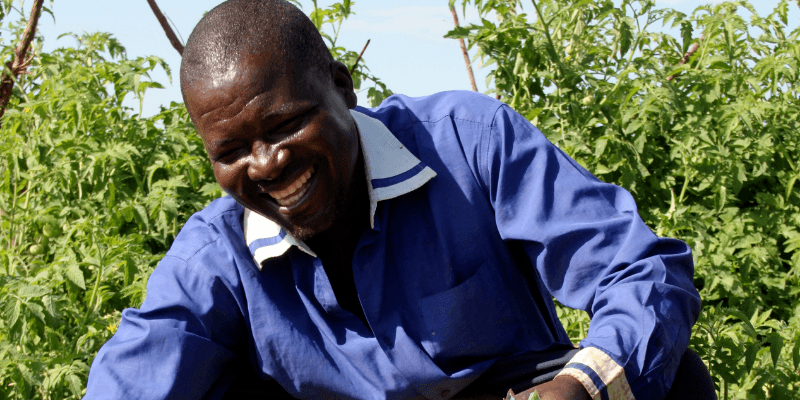 Thayo, from Mankhokwe in Malawi, holds a basket of tomatoes he has grown thanks to a solar irrigation scheme supported by All We Can.